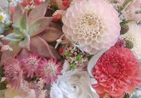 I fiori di Angelica